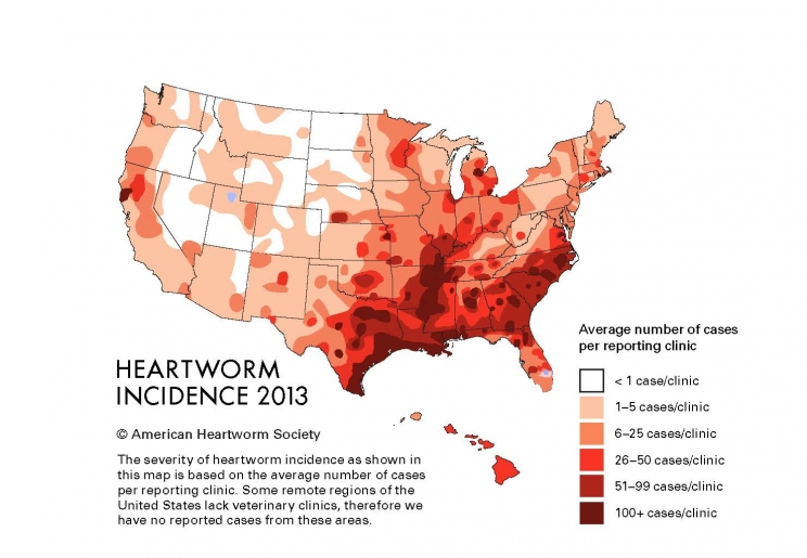 Ask Mosquito Season Heats Up, Pets More At Risk for Heartworms