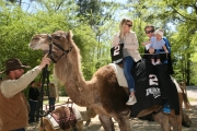 Nascar Champ Keselwoski At Birmingham Zoo: Temporarily Trades Race Car for Camel