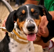 Southern Hunters Guide: Hunting Dog Breeds